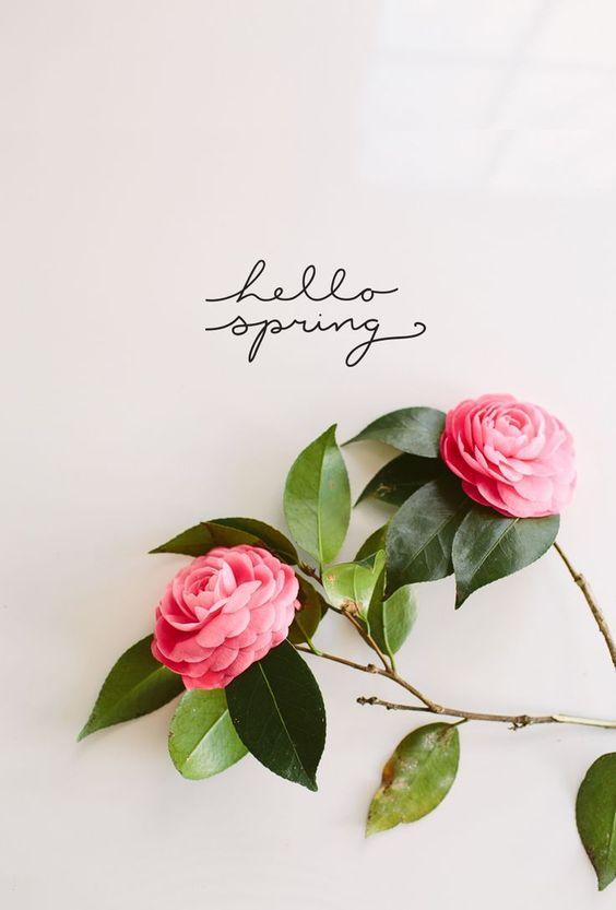Hello Spring….