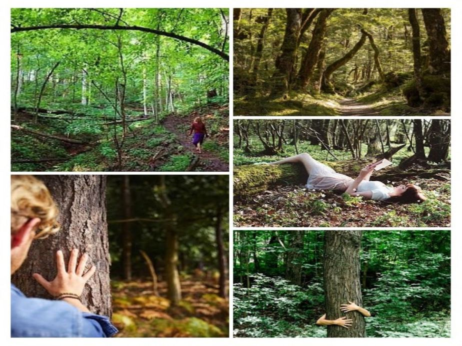 Forest Bathing and The Power of Green